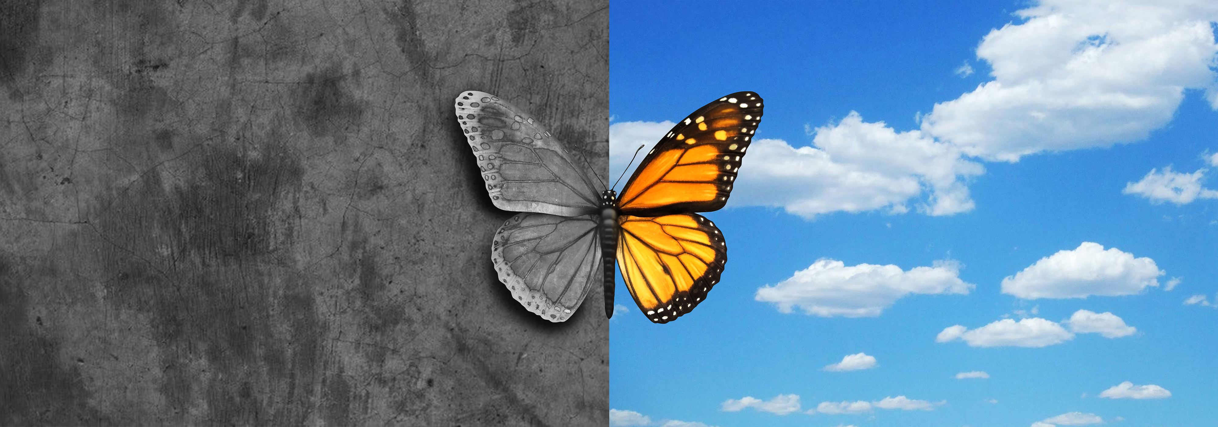 Bipolar mental disorder abstract psychological illness concept as a butterfly divided as one side in grey and sad colors with the other in full bright tones as a medical metaphor for psychiatric mood or feelings imbalance.